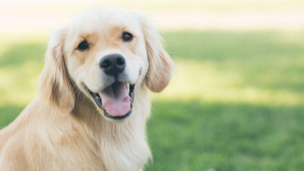 Wat zijn de meest populaire hondenrassen?